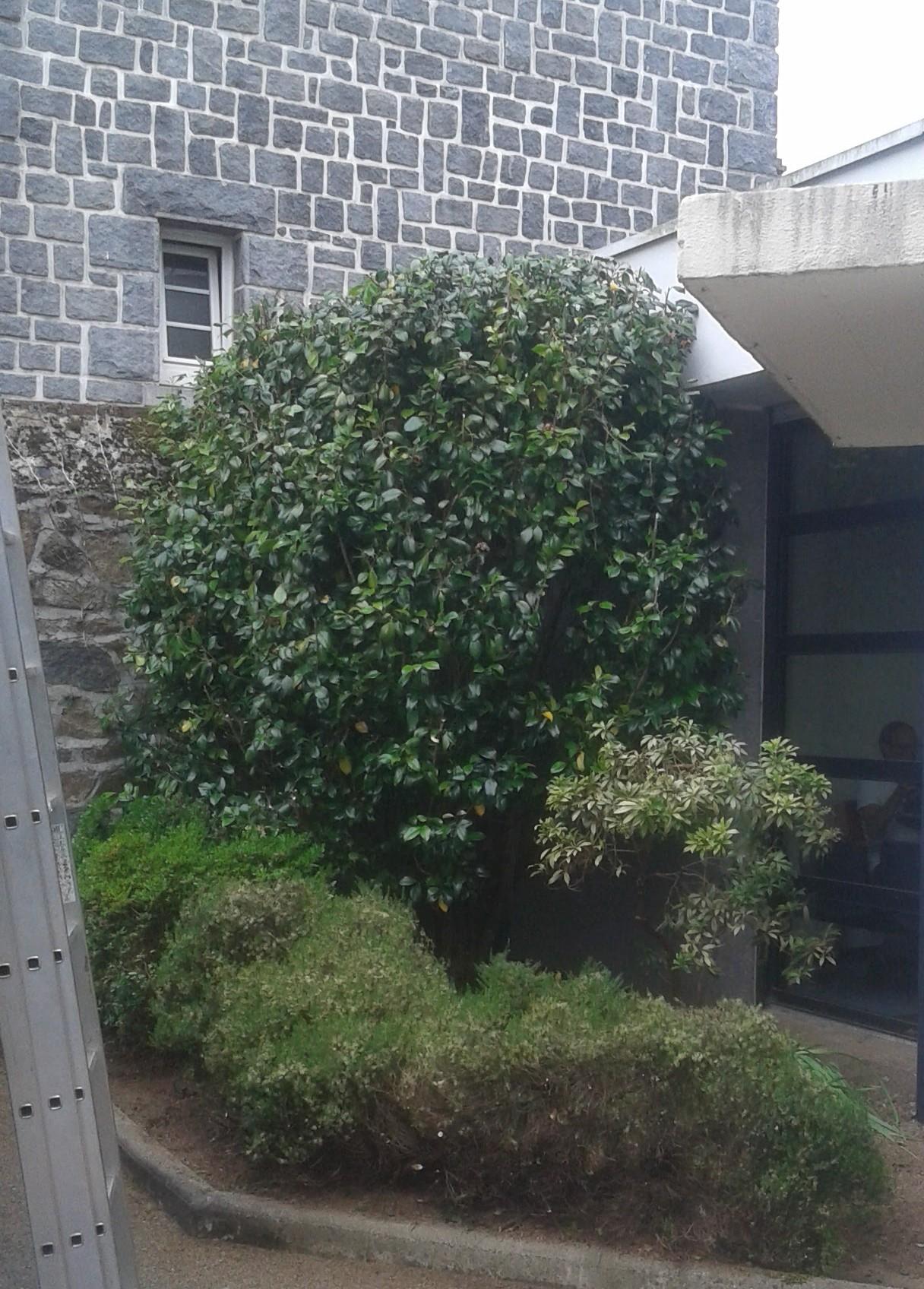 Taille et entretien des v g taux au bout de la branche - Taille des arbustes ...